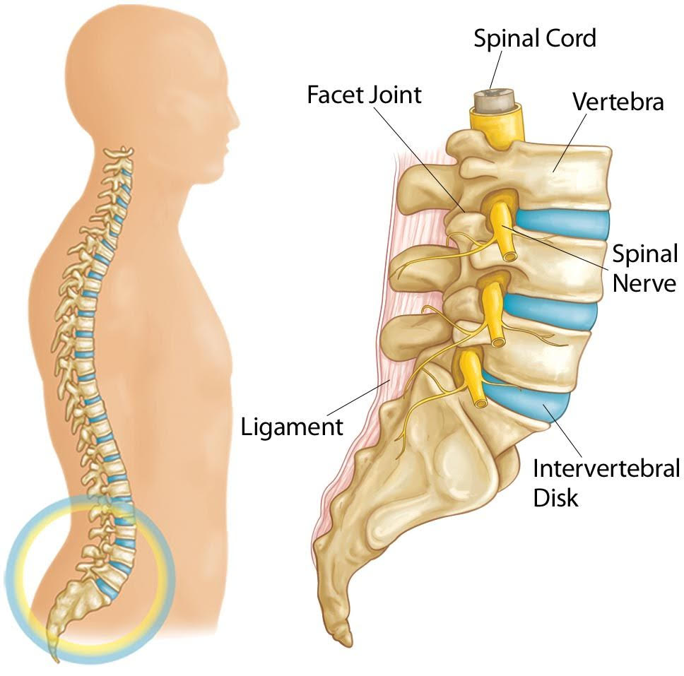 30+ Can you have a spinal fusion if you have osteoporosis ideas in 2021